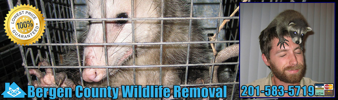 Bergen County Wildlife and Animal Removal